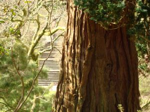 tree-trunk-with-steps
